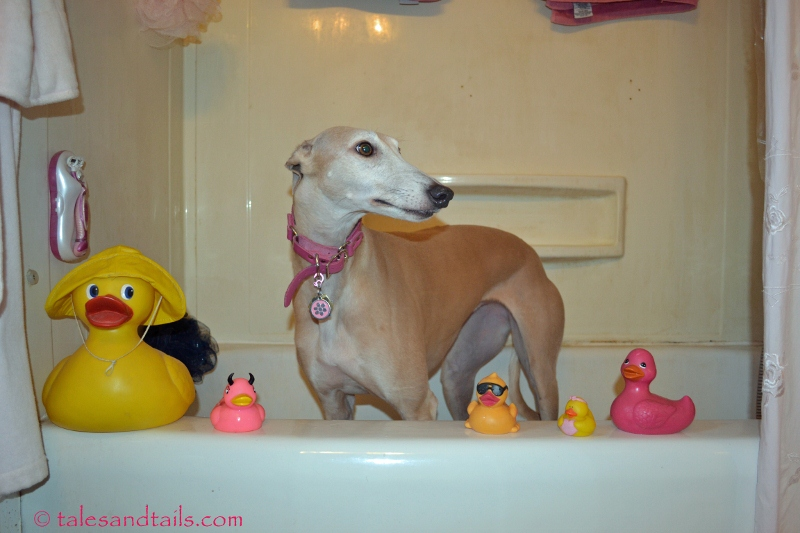 Pink Ducky -- Tales and Tails