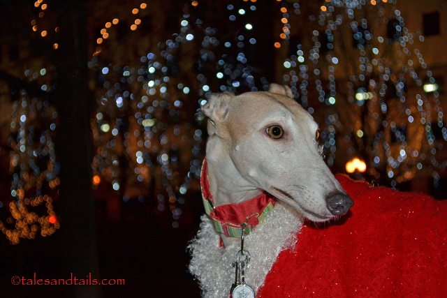 Twinkling Lights -- Tales and Tails