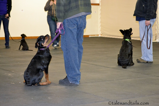Puppy Graduates At Attention