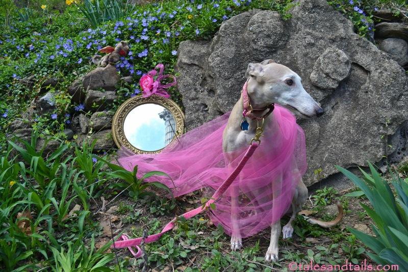 Fairy Tale Princess -- Tales and Tails