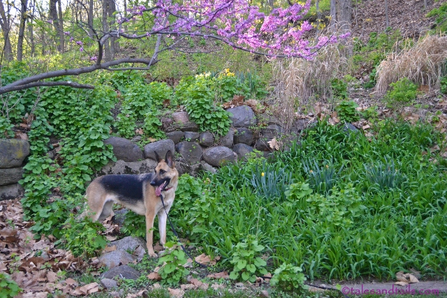 Meet Me In Springtime -- Tales and Tails