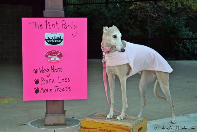 The Pink Party -- Tales and Tails