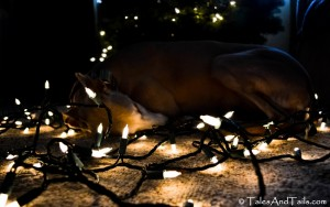 By The Glow of the Twinkle Lights -- Tales and Tails