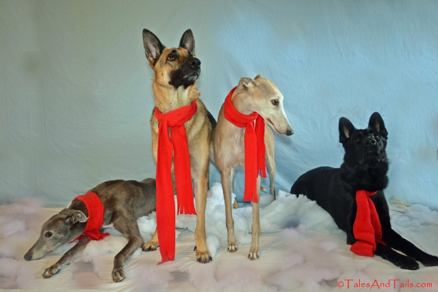 Christmas Tidings -- Tales and Tails
