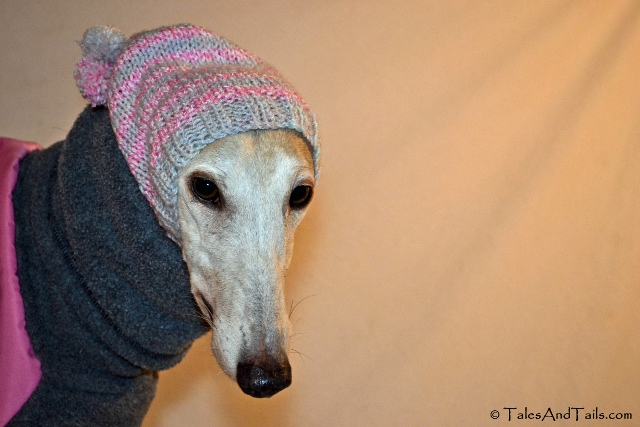 Knitting Patterns For Greyhound Hats : Greyhound Knitted Hats images