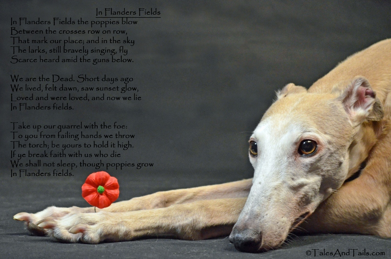 In Flanders Fields - Tales and Tails