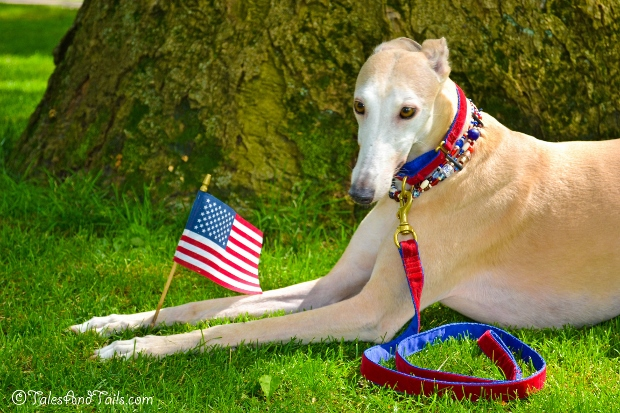 Miss Red, White and Blue -- Tales and Tails