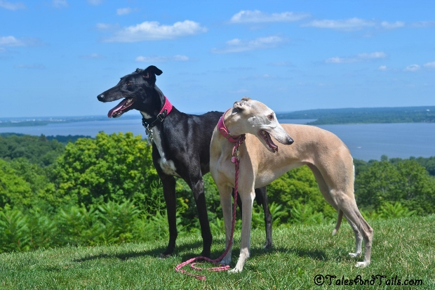 A Brace of Hounds -- Tales and Tails