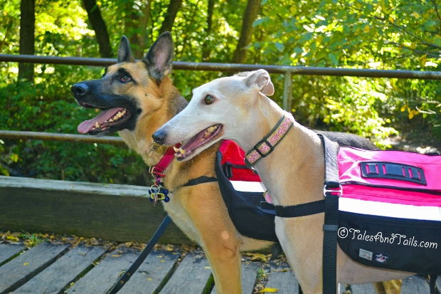 Let's Hike -- Tales and Tails