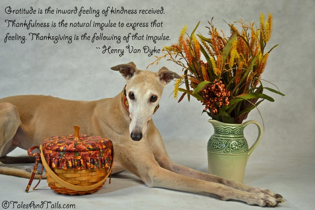 Feeling Grateful -- Tales and Tails