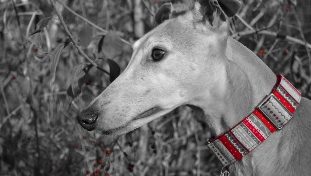 Hound Among the Holly -- Tales and Tails