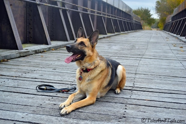 Morgan on the Bridge -- Tales and Tails