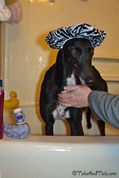 A Lady in the Bath -- Tales and Tails