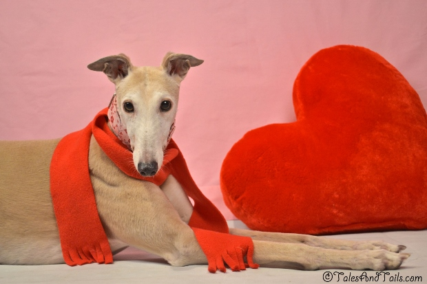 Heart Warmer -- Tales and Tails