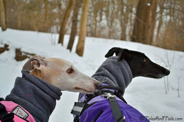 Hounds at the Trail Head -- Tales and Tails