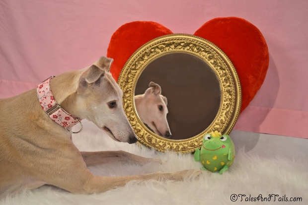 The Look of Love -- Tales and Tails