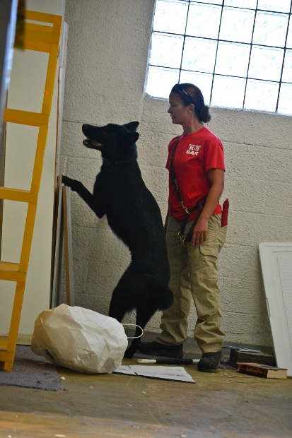 Human Remains Detection Dog Zack At Work -- Tales and Tails