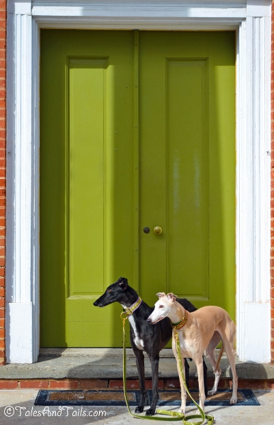 Door Watchers -- Tales and Tails