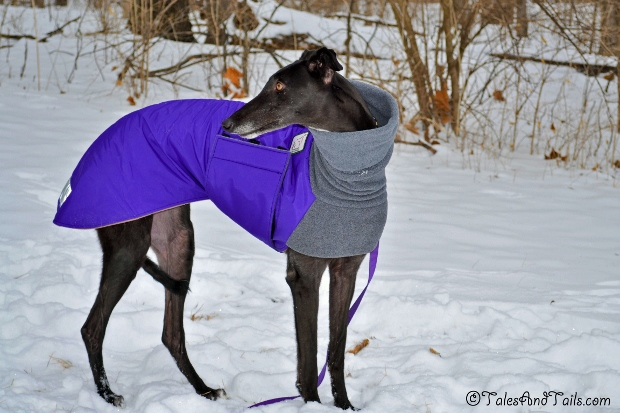 Flattery's Purple Coat -- Tales and Tails