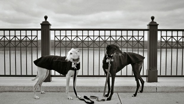Greyhound Bookends -- Tales and Tails