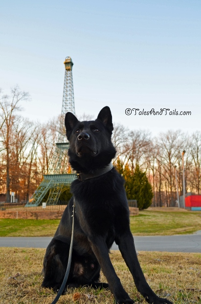 In Front of the Eiffel Tower -- Tales and Tails