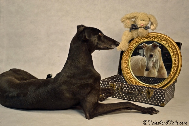 Magic Mirror -- Tales and Tails