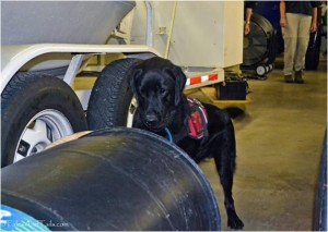 K-9 Brennan makes a find in a barrel. --TalesAndTails.com