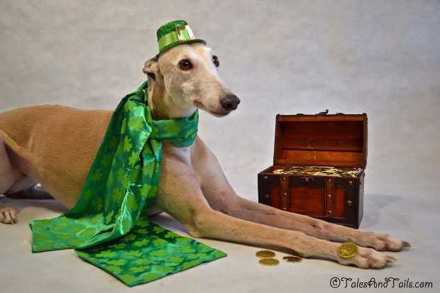 The Pot O' Gold -- Tales and Tails