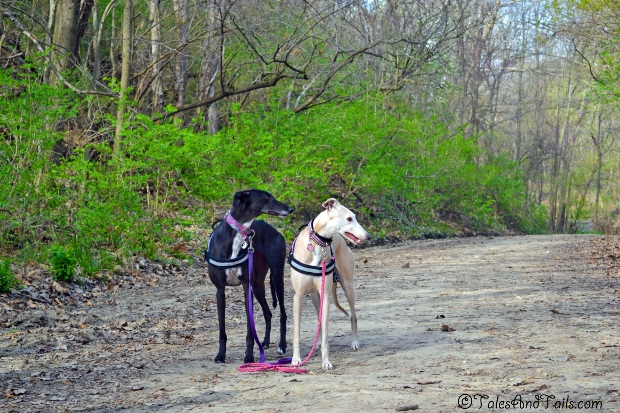 Hounds On The Trail -- Tales and Tails