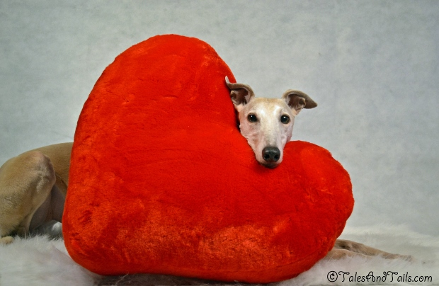 Symbol of Love -- Tales and Tails