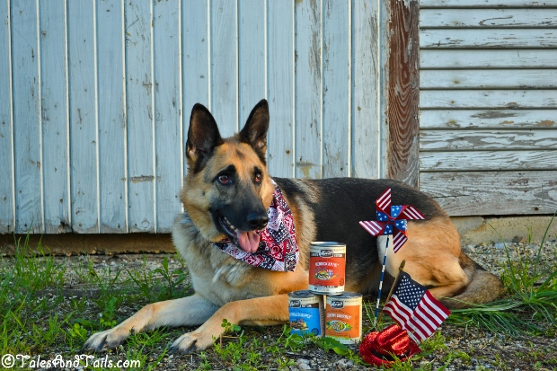 All American -- Tales and Tails #BestDogEver