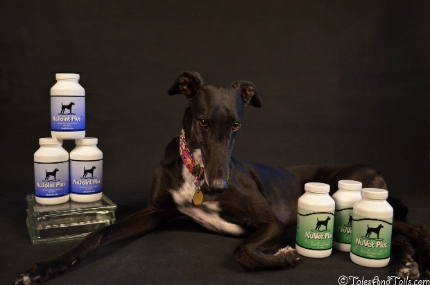 Supplements to Make Dogs Feel Good -- Tales and Tails