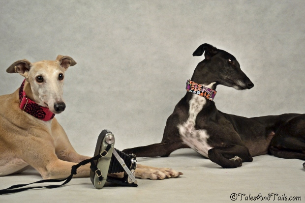 The Photographer and The Model -- Tales and Tails