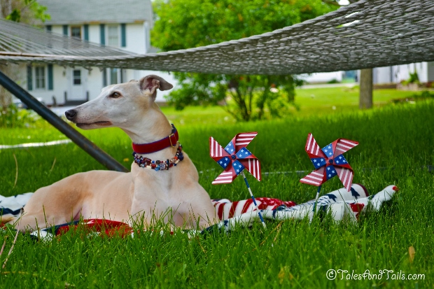 The Sweet Smell of Freedom -- Tales And Tails