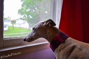Window Watcher -- Tales and Tails