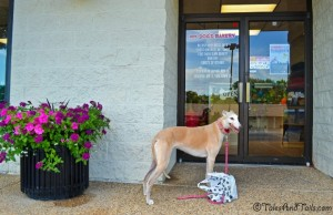 A Happy Shopper -- Tales and Tails