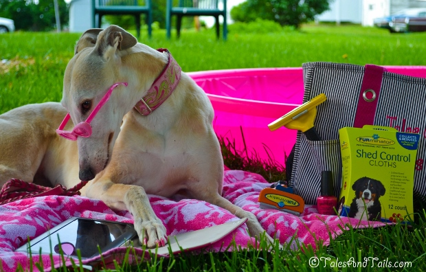 Staying Cool by the Pool -- Tales and Tails