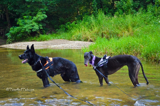 Crossing the Creek -- Tales and Tails