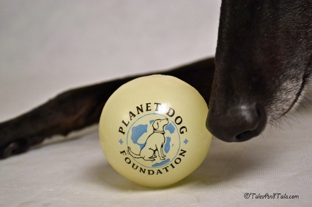Love This Ball -- Tales and Tails