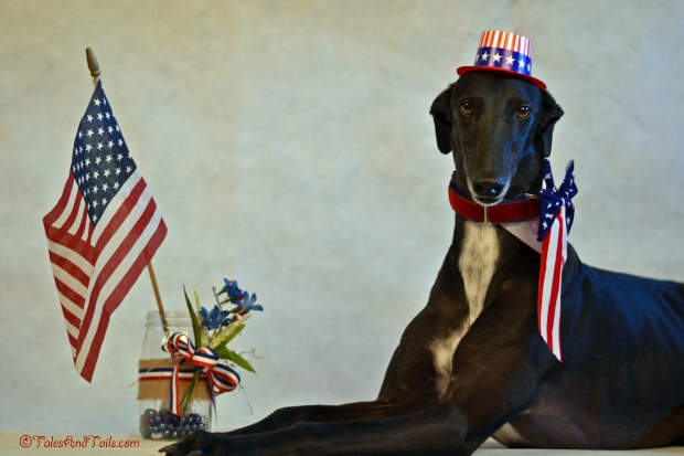 Yankee Doodle Dandy -- Tales and Tails