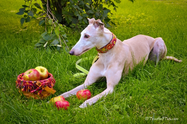 Apple Picking -- Tales and Tails