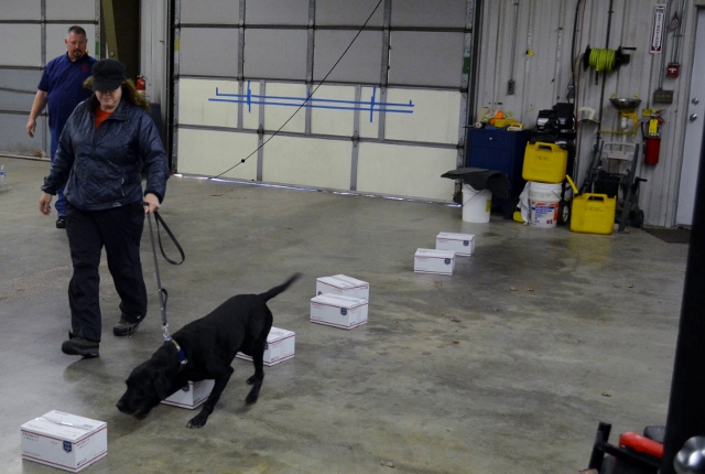 K-9 Working Drills for Distractions --TaleAndTails.com