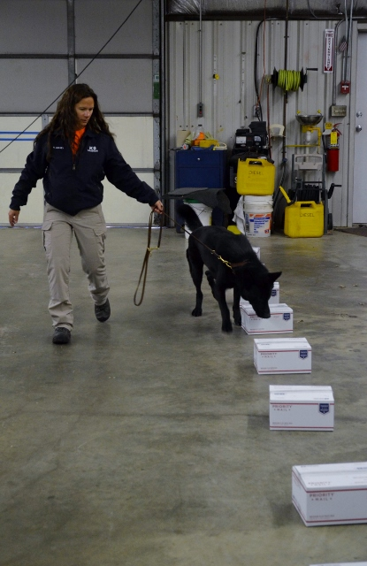 K-9 Zack searching boxes --talesandtails.com