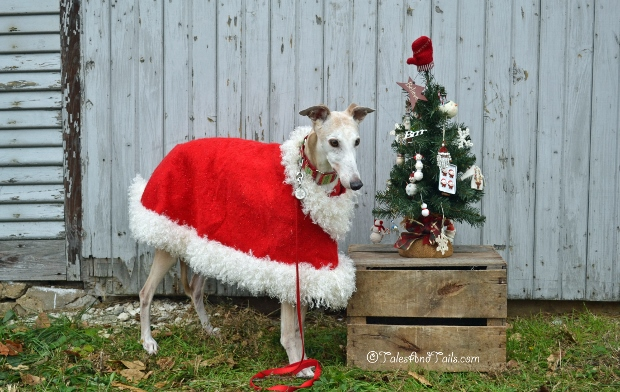 Christmas Cheer -- Tales and Tails