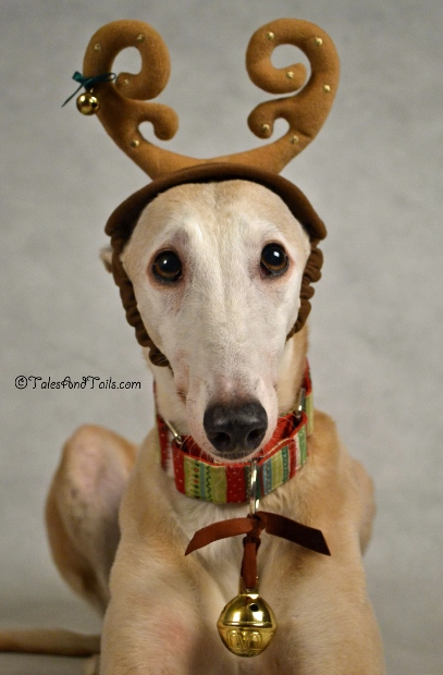 Reindeer Auditions -- Tales and Tails