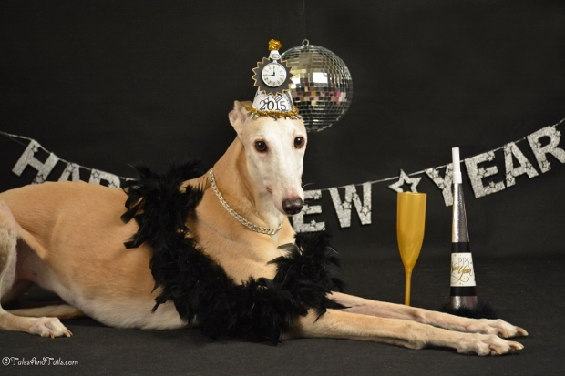 Bunny's Rockin' New Year's Eve -- Tales and Tails
