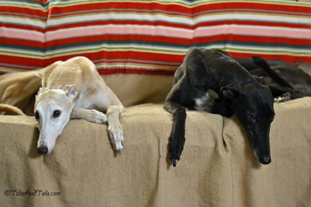Thankful For A Couch Of Our Own -- Tales and Tails