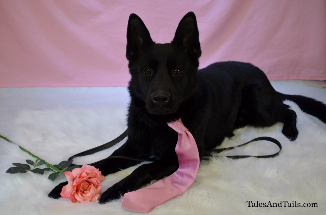 Happy Valentines Days! TalesAndTails.com