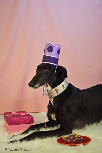 The Birthday Hound -- Tales and Tails