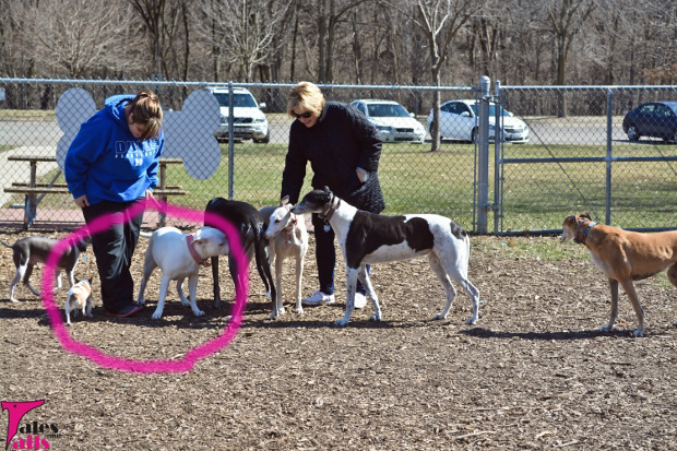 The Dog Park Rumblers -- Tales and Tails